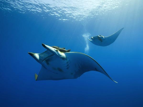 Gili Islands Diving