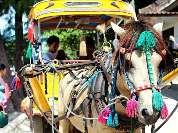 gili islands horse cart
